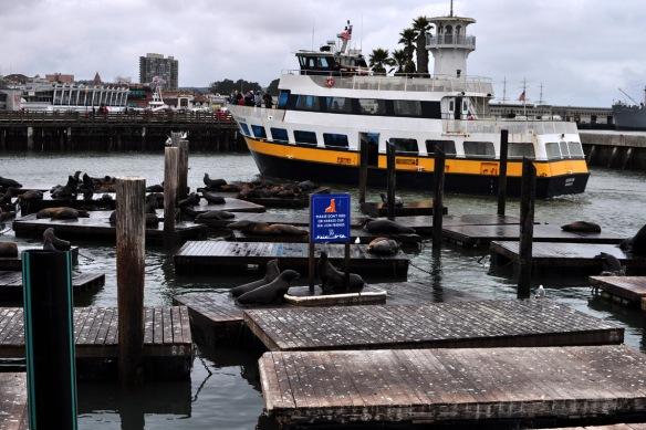 Sea Lions at Pier 39, San Francisco Wharf