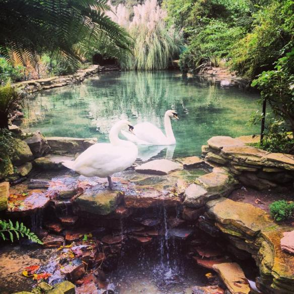 Visiting the Hotel Bel-Air, and its swans