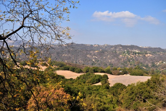 A view of Topanga State Park