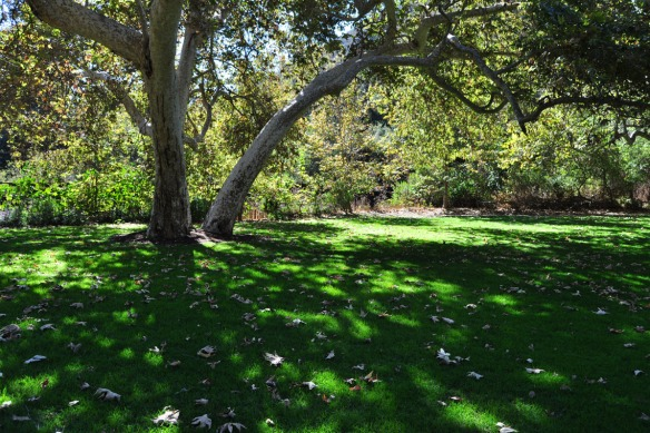 The Great Lawn at Temescal Gateway Park