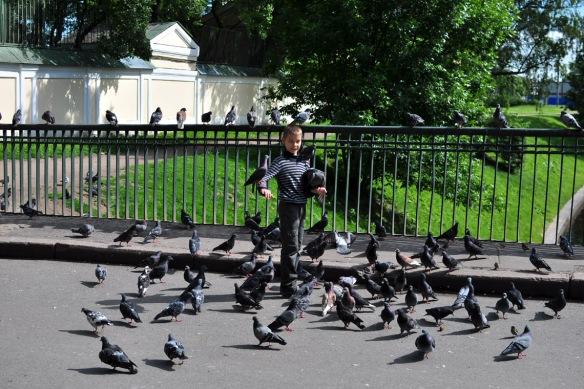Pigeons at Alexander Nevsky Monastery